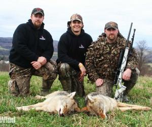 Coyote Tactics